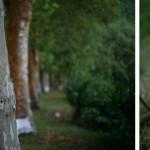 Ehm Kannegieser: Platanenblüte