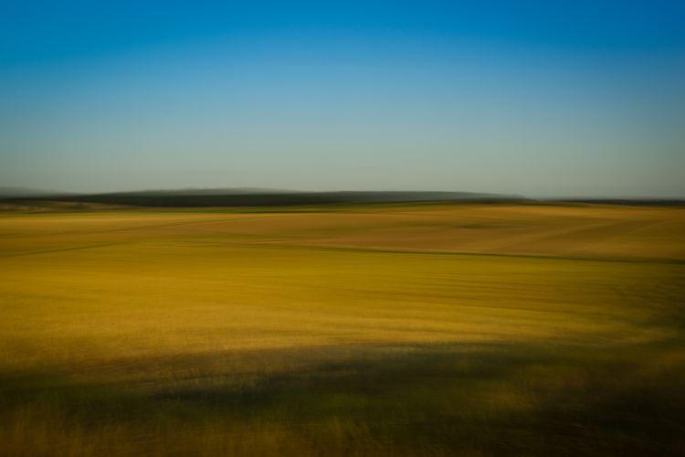 fields_of_gold